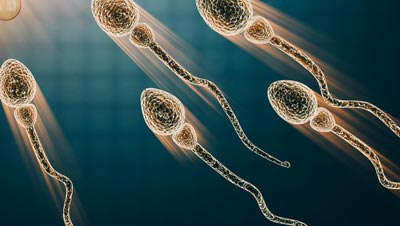 337_sperm-dna-damage-screening_secondary.jpg